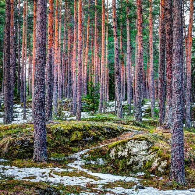 *Snorre Veggan –Stallerudåsen