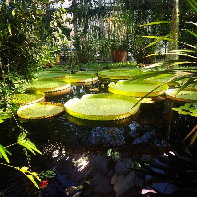 Johanne Cicilie Juell Kristensen - Botanisk hage
